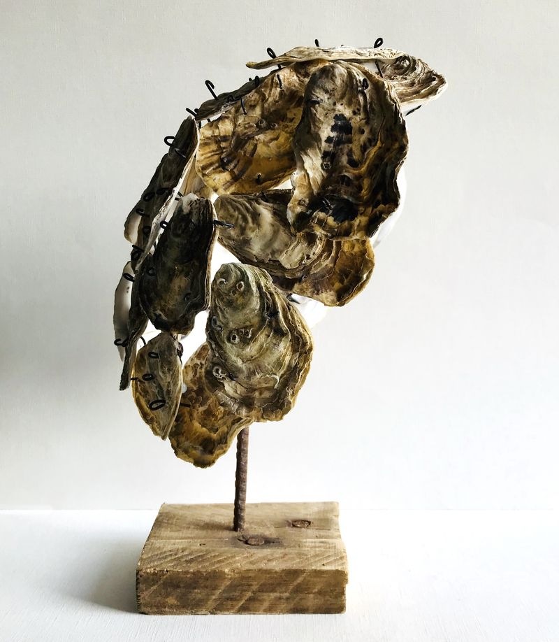 Oyster cut
